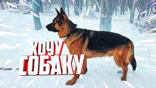 Хочу собаку О немецкой овчарке и о том Как Дум выполняет Барьер