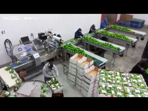 Flow Wrap Machine: RGD Mape VR-8 Master with Label Applicator Packing Green Bell Peppers