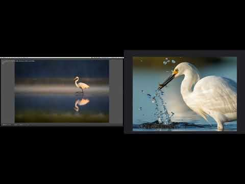 Bird Photography during Golden Hour