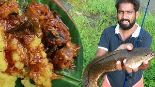വരാൽ പിടുത്തവും തലെ ദിവസത്തെ വരാൽ കറിയും കപ്പയും | SnakeHead Catch And Cook | Murrel Fish Recipe
