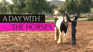 A Day at the Barn - HORSE + PONY VLOG | Kelsey Lee