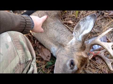 opening day 8mm Mauser buck public land 8 point