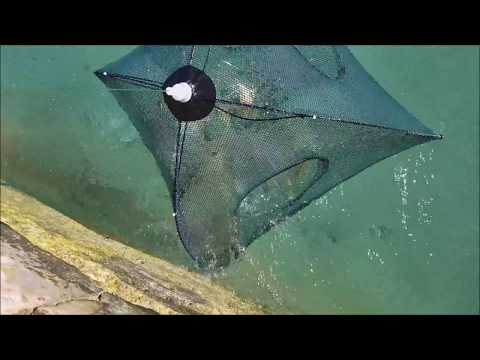 Amazing Sea fish Trap - Lots of Fish Under Water