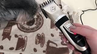 Обзор Baorun машинка для стрижки собак с Алиэкспрес
