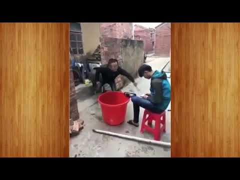 New Funny videos 2017