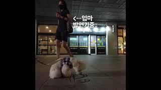 20분만에 엄마를 만난 강아지의 반응! 눈물주의@@