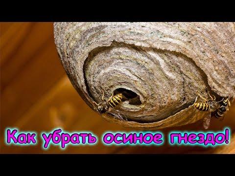 Как убрать осиное гнездо из сарая
