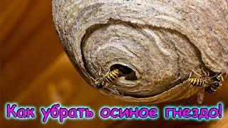 Борьба с осиным гнездом! (08.18г.) Семья Бровченко.