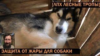 [VLOG_ЛТ:#119] как защитить собаку от жары во дворе в сенях