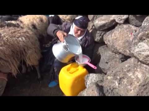Karacadağ'da peynir üretimi