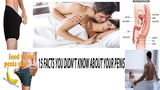 15 FACTS YOU DIDN'T KNOW ABOUT YOUR PENIS