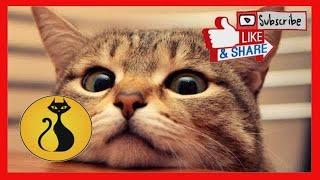 Funny Cats and Cute Cats Videos Compilation !Gatos Lindos y Gatos Adorables Vídeo Recopilación