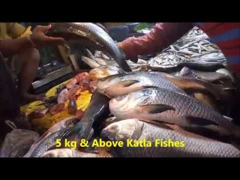 Extraction & Collection Of Pituitary Gland From Katla Fish L Must Watch