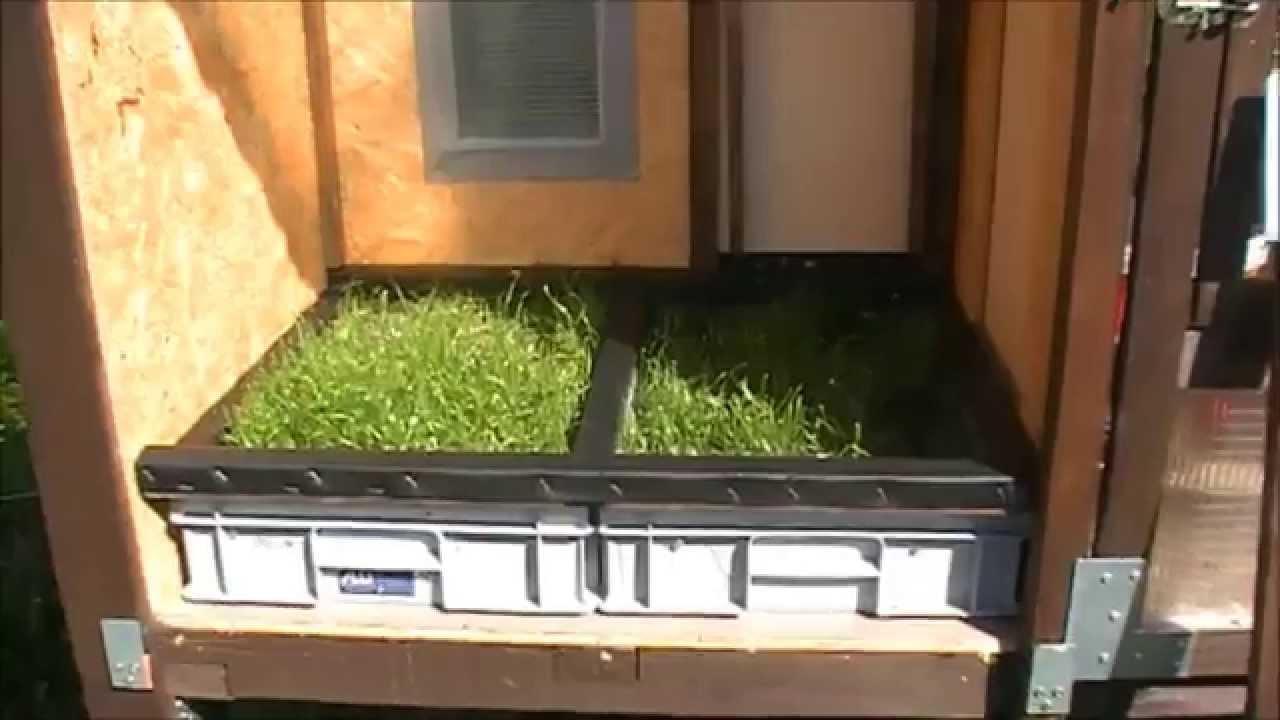 Gras im wachtelstall youtube for Kaninchenstall einrichten