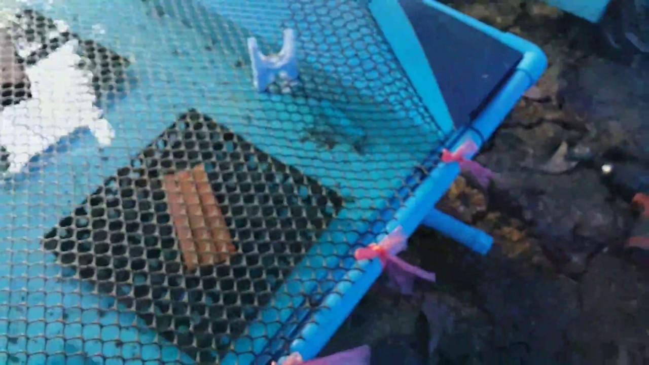 ทำท่อระบายน้ำบ่อฟิวเจอร์บอร์ด สำหรับเลี้ยงกุ้งเครย์ฟิช ข้อต่อเกลียวนอก เกลียวใน
