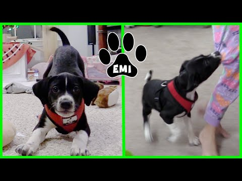 cute-puppy-scares-kids-funny-puppy-attack---emis-world