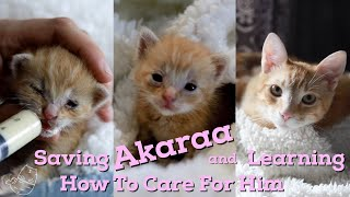 Step by step caring for a newborn kitty | Learn how to take care of a newborn cat | Akaraa's story