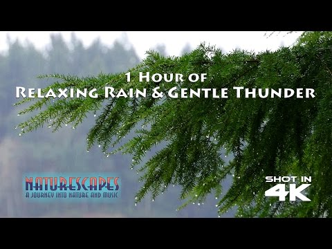 1 Hour of Relaxing Rain & Gentle Thunder for Nature Relaxation, Study, Sleep and Meditation