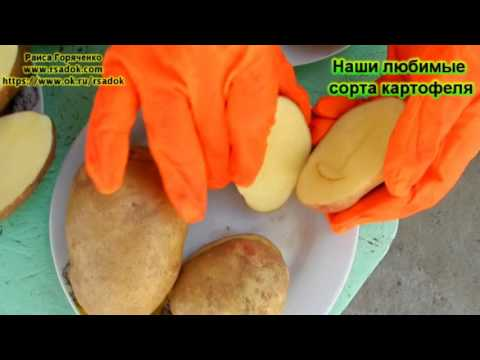 Наши любимые сорта картофеля