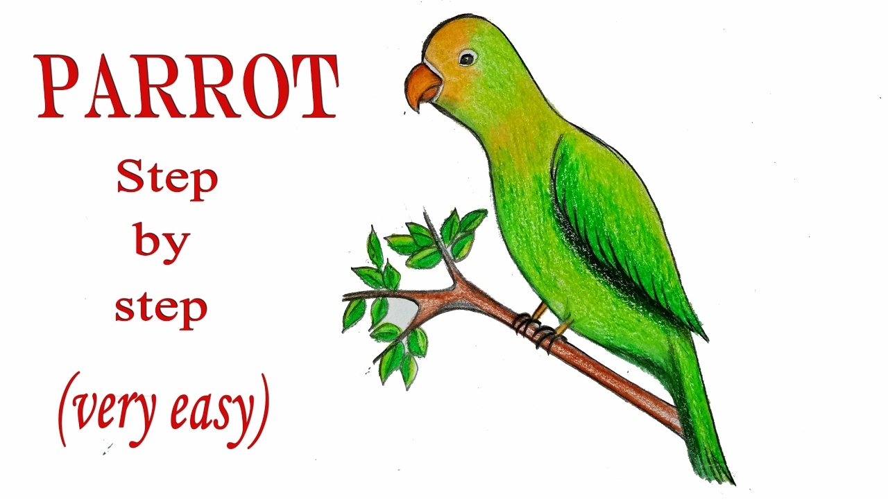 Uncategorized Easy Parrot Drawing how to draw a parrot step by very easy youtube easy