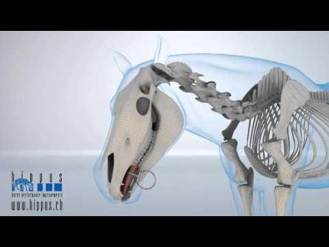 Hippus Horse Bits