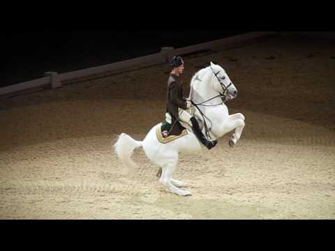 The Spanish Riding School of Vienna 07