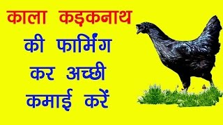Start Kadaknath Breed Poultry Farming and Earn Good Profit