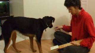 Shaping Explained- Part 1 Of Training Your Dog To Turn On A Light Switch With Clicker