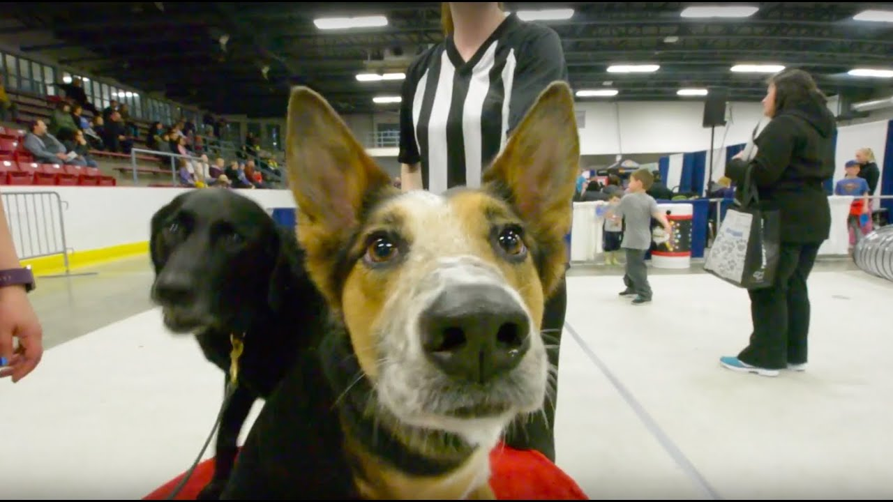 KW Pet Expo - A Show for Pet Lovers