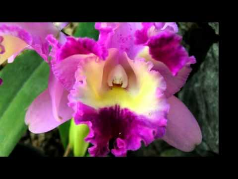 Flores ex ticas youtube for Plantas exoticas de interior
