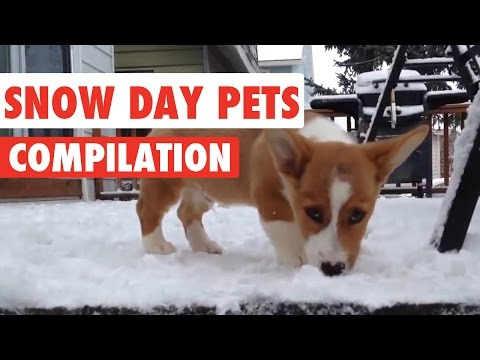 Snow Day Pets Video Compilation 2016