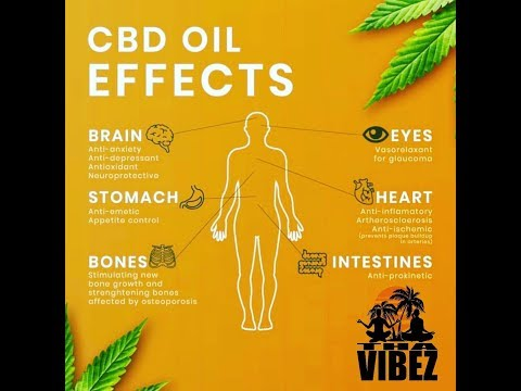learn-how-cbd-oil-effects-the-body