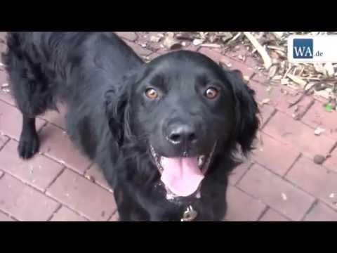 Tierheim Hamm: Fünf Hunde suchen Zuhause