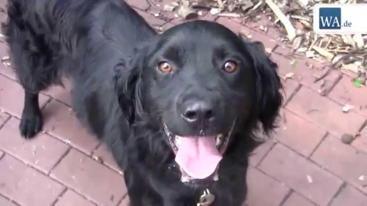 Tierheim Hamm F 252 Nf Hunde Suchen Zuhause Youtube
