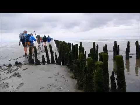 Walking Series  - Hiking the Mudflats