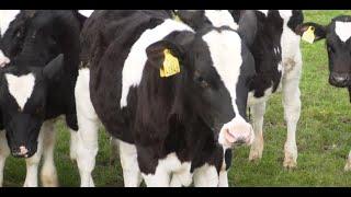 Farm Walk 2020: Shane Cranny