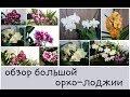 ОРХО обзор большой лоджии цветения января mp3
