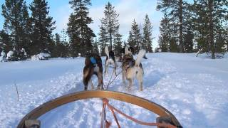 A short clip from husky sledding near Saariselka in Lapland, Finland.