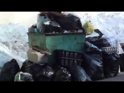 Роспотребнадзор представил рекомендации по частоте вывоза с площадок сбора ТКО раздельных отходов,