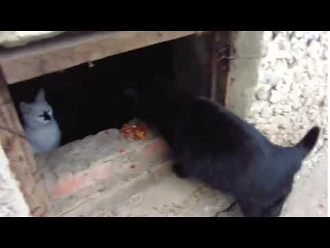 Scared cats jumping from basement8