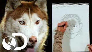 Artista forense retrata perros para identificarlos con dueños | Mythbusters: Los cazadores de mitos