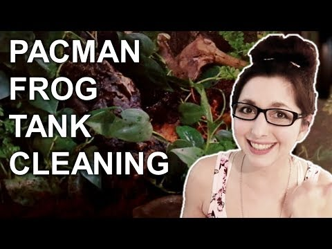 Pacman Frog Tank Cleaning