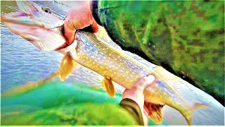 Зимняя рыбалка на щуку с летними жерлицами