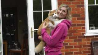 MARMALADE the hugging rescue cat saved from death!