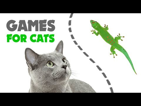 CAT GAMES ★ LIZARD on the SCREEN