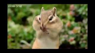 Beat Boxing Squirrel