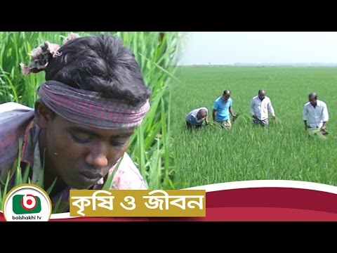 Krishi O Jibon | Cultivation Of Boro | Agricultural Development Program