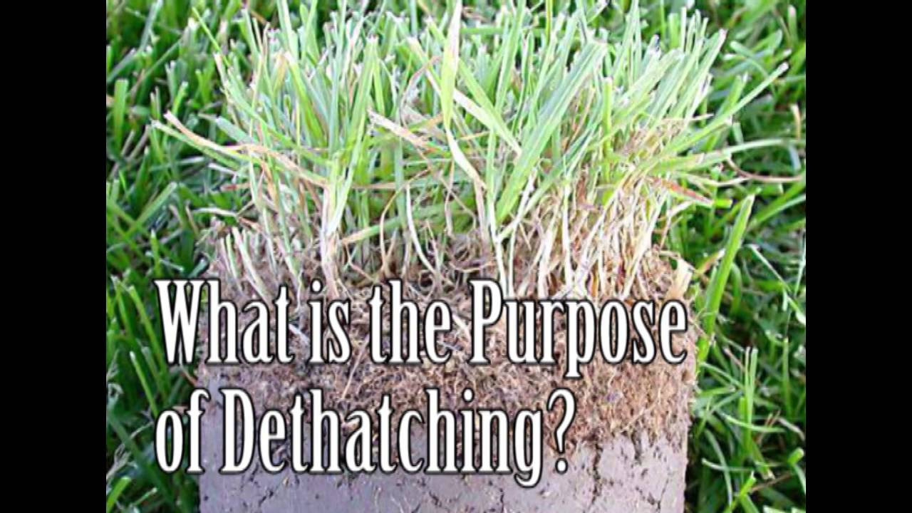 What Is Dethatching Should You Dethatch Your Lawn