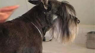 Как сделать собаке укол