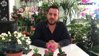 MAGİDER - Deniz Çiçekçilik - Erdeniz Sarıdağ Röportajı